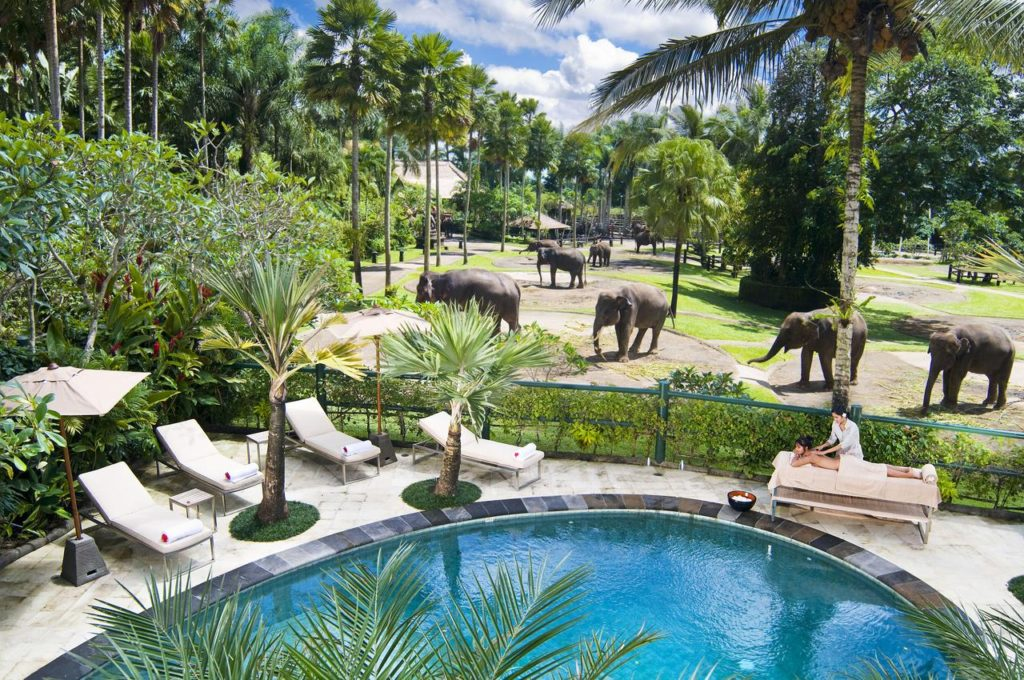 Отель Elephant Safari Park Lodge  на Бали